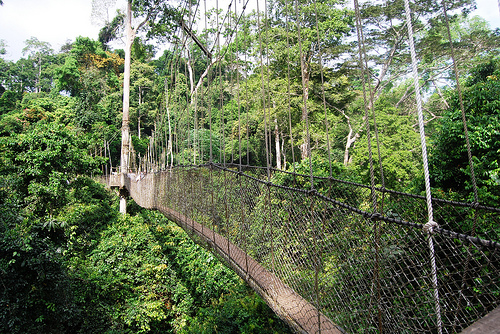 GHANA  - KAKUM NATIONAL PARK, CANOPY WALK - DECEMBER  2010